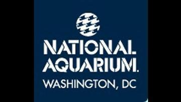 National Aquarium to Close in D.C. After 128 Years
