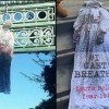 Effigies of Blacks Found Hanging by Nooses at UC Berkeley