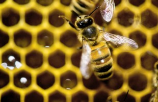 Honey Bees and Silkworms are Economic Gold Mines for Ethiopian Youth